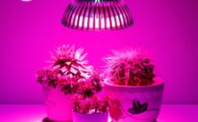 How to pick the best LED Grow Light?