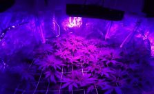 G8 LED for Healthy Indoor Weed Growth